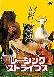 レーシング・ストライプス[DVD]