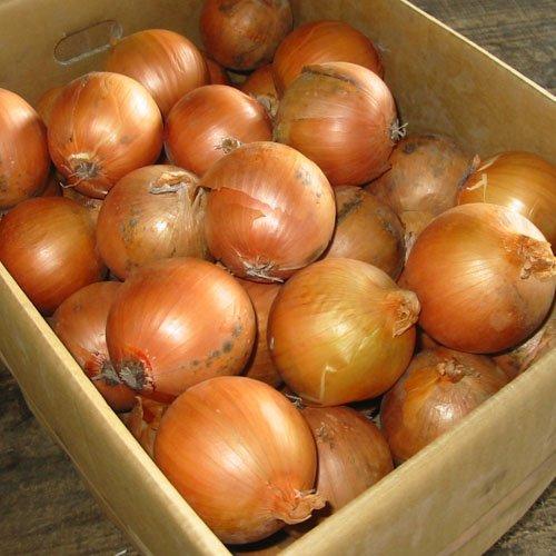 北海道産 玉ねぎ L大サイズ 5kg詰め 玉葱 タマネギ たまねぎ