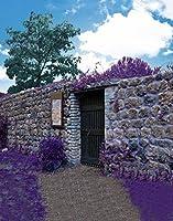 A Monamour 5x 7ftビニール生地パープルラベンダーフラワーフィールドLandブルースカイ風景Nature Landscapeテーマ写真背景