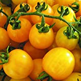 Cherry Tomato Yellow Cherry Honey Bee 15+ Seeds Heirloom Vegetable Garden Easy