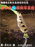 時間をとめた生きものたち 栗林慧ひみつの瞬間写真館 魚・カエル・鳥―たくみな生きもの (時間をとめた生きものたち栗林慧ひ…