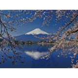 富士山 写真ポスター 桜
