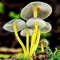 種子パッケージ: 24 NDSはホーム&アンペアのためにおいしい美しいSucclt食用植物を盆栽。ガールの100pcs / G:18