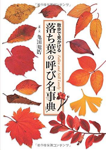 落ち葉の呼び名事典 散歩で見かけるの詳細を見る