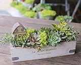 多肉植物 寄せ植え セット ( ハウス ) 横長 ウッド BOX ( M サイズ ) 観葉植物