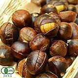 自然の館 有機栽培 天津甘栗480g(240g×2袋)