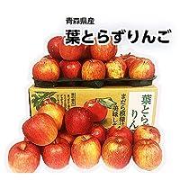 【青森県産】JAつがる弘前 葉とらずりんご 約10kg 大きさおまかせ りんご サンふじ 葉とらず 蜜りんご 太陽ふじ お中元 のし ラッピング 可