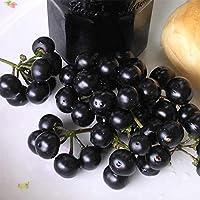 [野菜タネ]ガーデンハックルベリー の種2袋セット[欧米では家庭で栽培され、ジャムなどに!春まき] ノーブランド品