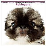 カレンダー 2019 壁掛け THE DOG 犬 ペキニーズ 403227 2018年9月—2019年12月 アーリスト イヌ いぬ Pekingese