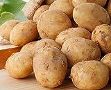 北海道産 じゃがいも 北あかり  L サイズ 10kg ジャガイモ 《 プレゼント鮮度保持袋付き★》