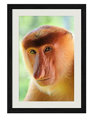 テングザルクローズアップ 動物の写真木製黒額縁アートポスター(30cmx40cm)