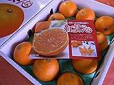 フルーツyamakiti ゼリーの食感!超プレミアム柑橘 愛媛 紅まどんな 3キロ化粧箱
