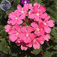 種子パッケージ: E4200xR5:BELLFARM盆栽版ハイブリガールは長いflowe高い発芽-80pcs /パックをesstis
