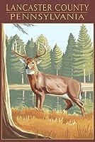 ランカスター郡ペンシルベニア州、–ホワイトTailed Deer 24 x 36 Giclee Print LANT-52539-24x36