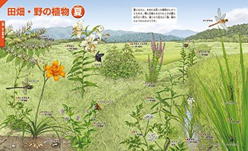 講談社『講談社の動く図鑑MOVE植物』