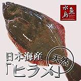魚水島 天然ヒラメ 平目 日本海産 3.5~3.9キロ物