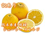 【訳あり】熊本産 河内晩柑 和製グレープフルーツ 柑橘 約10kg