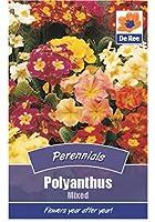 Polyanthusミックスフラワーガーデンシード2パック