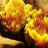 鹿児島県 種子島産 あま~い安納芋3kg 安納さげ芋長 中サイズ 秀品