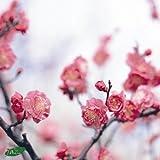 春のおとずれ~スプリング・ジャズ・コレクション