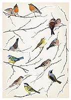 ブリュースターコーマーLV19005ピール&スティック鳥ヨーロッパの壁飾り