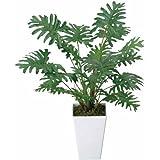 光触媒観葉植物 クッカバラ テーブルタイプ 光触媒 花 スプレー インテリアグリーン 胡蝶蘭 消臭 大型