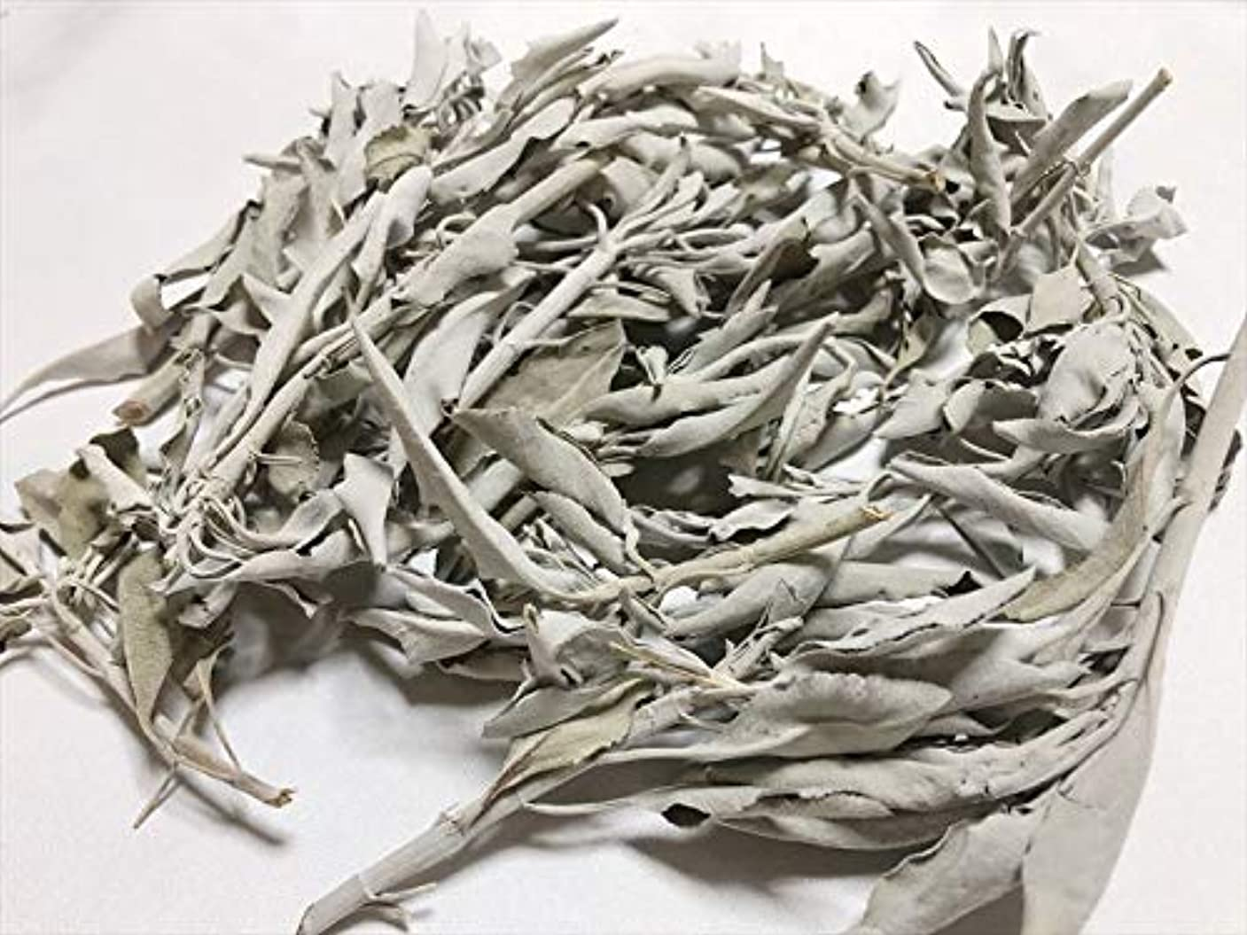 つぼみいま討論ホワイトセージ 100g 有機栽培 浄化 枝付き 完全密封 乾燥剤入り カリフォルニア産 お香 スピリチュア