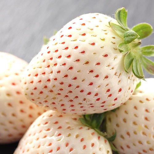 奈良県産 白い苺 いちご パールホワイト 230g 2パック詰め
