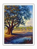 ヴィンヤードのバレーオーク - ワインカントリーアート によって作成された カーン・エリクソン - アートポスター - 23cm x 31cm