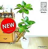 LAND PLANTS アルテシーマ 曲がり 3Dカーブ 白セラアート鉢