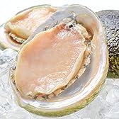 築地の王様 あわび アワビ 鮑 2Lサイズ 1kg 1箱10個入り 殻つきお刺身用アワビ 高級料亭でも使用する新鮮な殻付きあわび