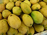 糖分も一切加えない自然の味【業務用・マンゴーの王様100%ピューレ(1Kg入り)常温保存タイプ】