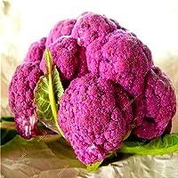 100のブロッコリー盆栽オーガニック家宝工場野菜盆栽家の庭のために92%+発芽非GMO 野菜:8