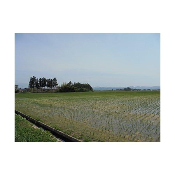【精米】【Amazon.co.jp限定】宮城県...の紹介画像4