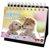 アクティブコーポレーション 2017年 犬 カレンダー 日めくり ACL-575