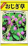 日本農産種苗 おじぎ草のタネ おじぎ草