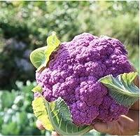 ホット販売20ピースカリフラワー種子紫野菜おいしい天然有機グリーンフード種子diyホームガーデン