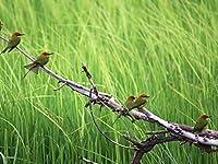 芸術はポスターを印刷します - 鳥の色枝木草の群れ座り - キャンバスの 写真 ポスター 印刷 (80cmx60cm)