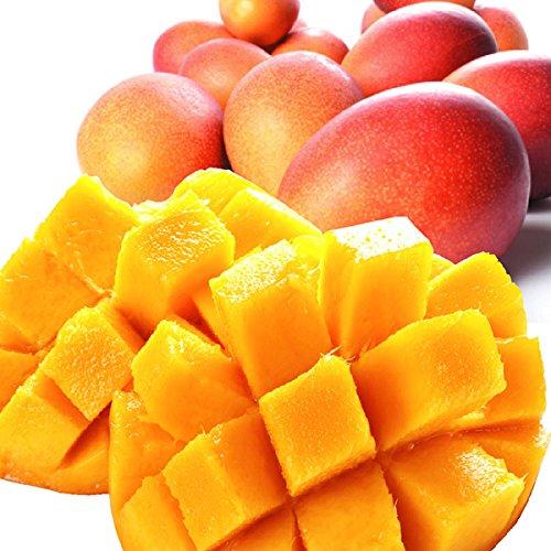 国華園 宮崎産ご家庭用 マンゴー 1kg1箱 マンゴー