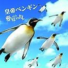 皇帝ペンギン【初回限定盤】(在庫あり。)