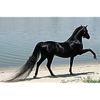 雄大な黒い馬の動物 - #19831 - キャンバス印刷アートポスター 写真 部屋インテリア絵画 ポスター 90cmx60cm