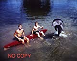 大きな写真、TV「わんぱくフリッパー」ボードの少年とイルカ