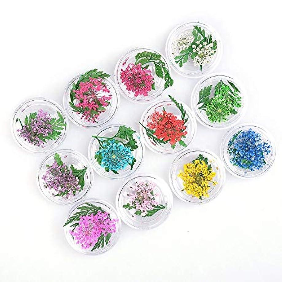 カリキュラムセッション電圧押し花 ドライフラワー 葉 3Dネイル レジンデコレーション 12種 色