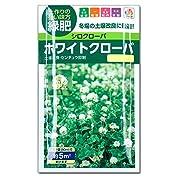 [タネ]ホワイトクローバーの種5平米分(20ml)入り 3袋セット