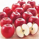 林檎(リンゴ)苗木 紅玉(わい性台木)