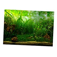 F Fityle 全6サイズ 魚タンク 3D HD画像 背景 接着剤 ポスター 装飾 ステッカー 水生植物 海洋風 - 61x41cm