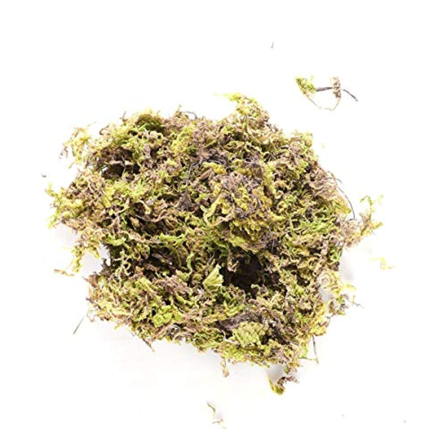 町呼びかける頑固なHEALLILY 乾燥したコケの森の緑の鉢植えの植物のテラリウムの妖精の庭の芸術の工芸品の装飾100 gの保存