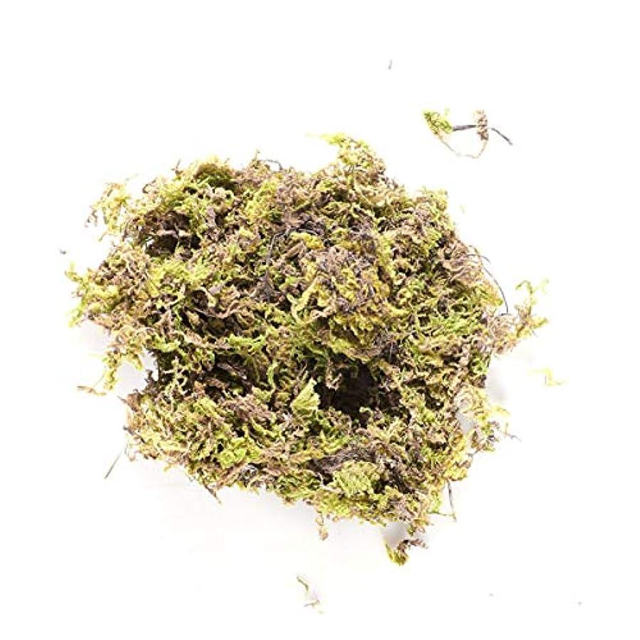 コードレス悪化させる欲求不満HEALLILY 乾燥したコケの森の緑の鉢植えの植物のテラリウムの妖精の庭の芸術の工芸品の装飾100 gの保存