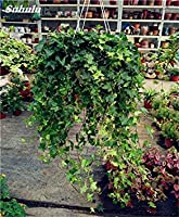 1:プロモーション100個Chlorophytum種子屋内盆栽種子はfarmerlyでDIYのシード1を鉢植えの花の種を吸収します