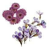 デイジー&ロベリア フラワー 乾燥花 押し花 ブレスレット/ネックレス アクセサリー 20枚セット
